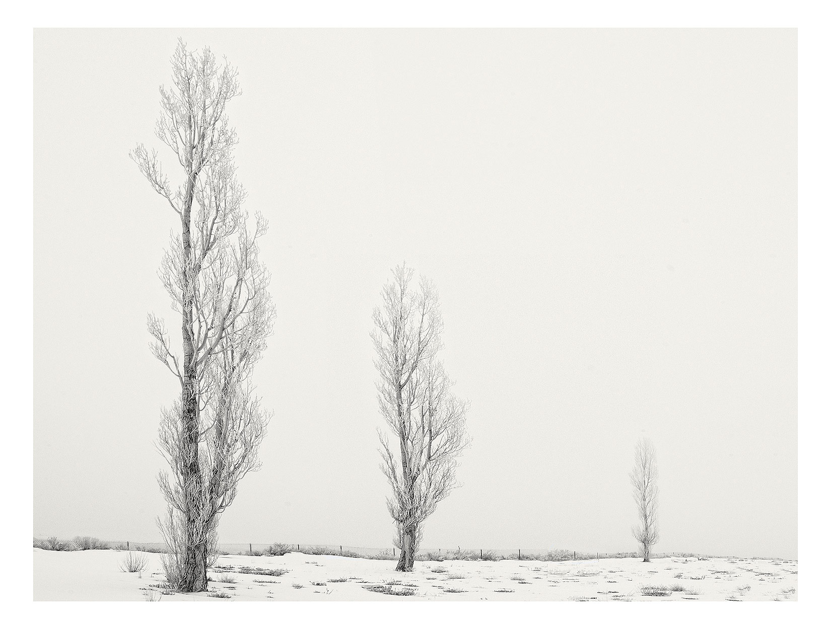 Three-trees