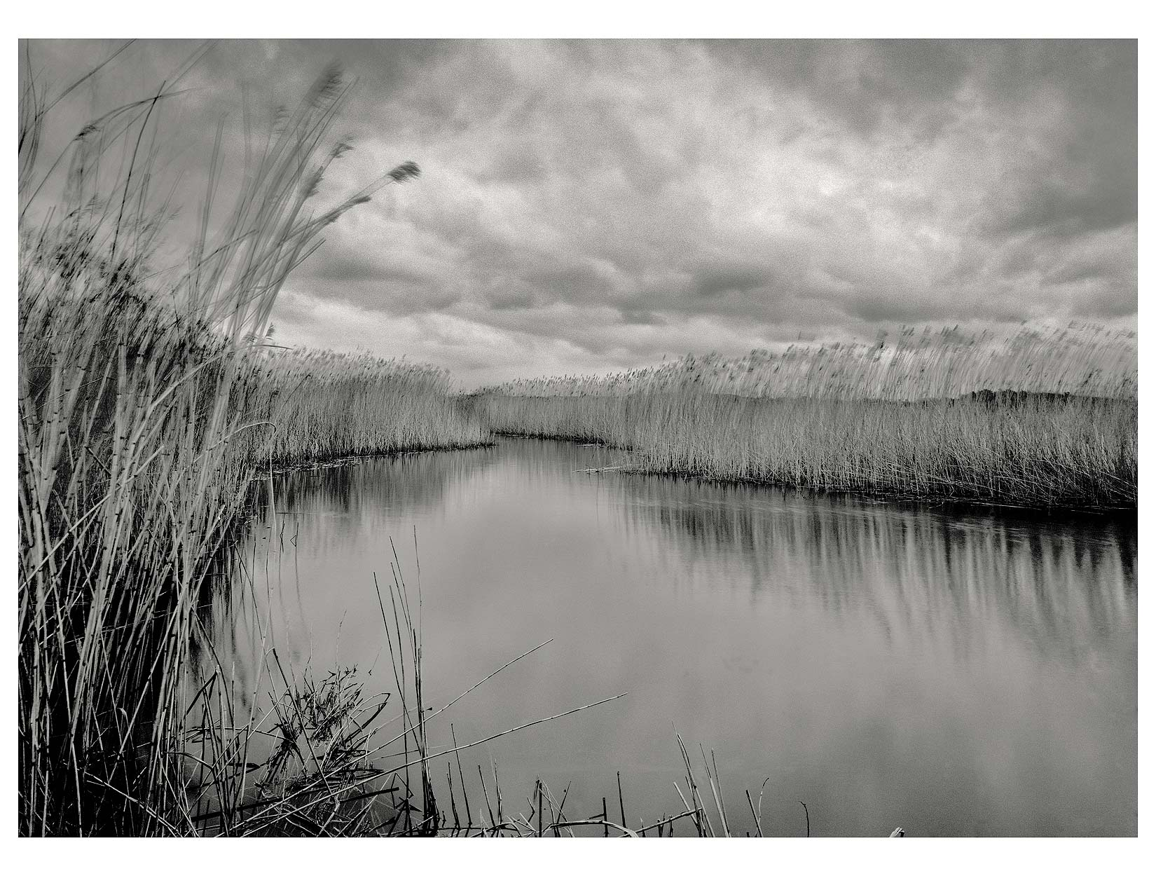 reeds-on-a-quiet-river
