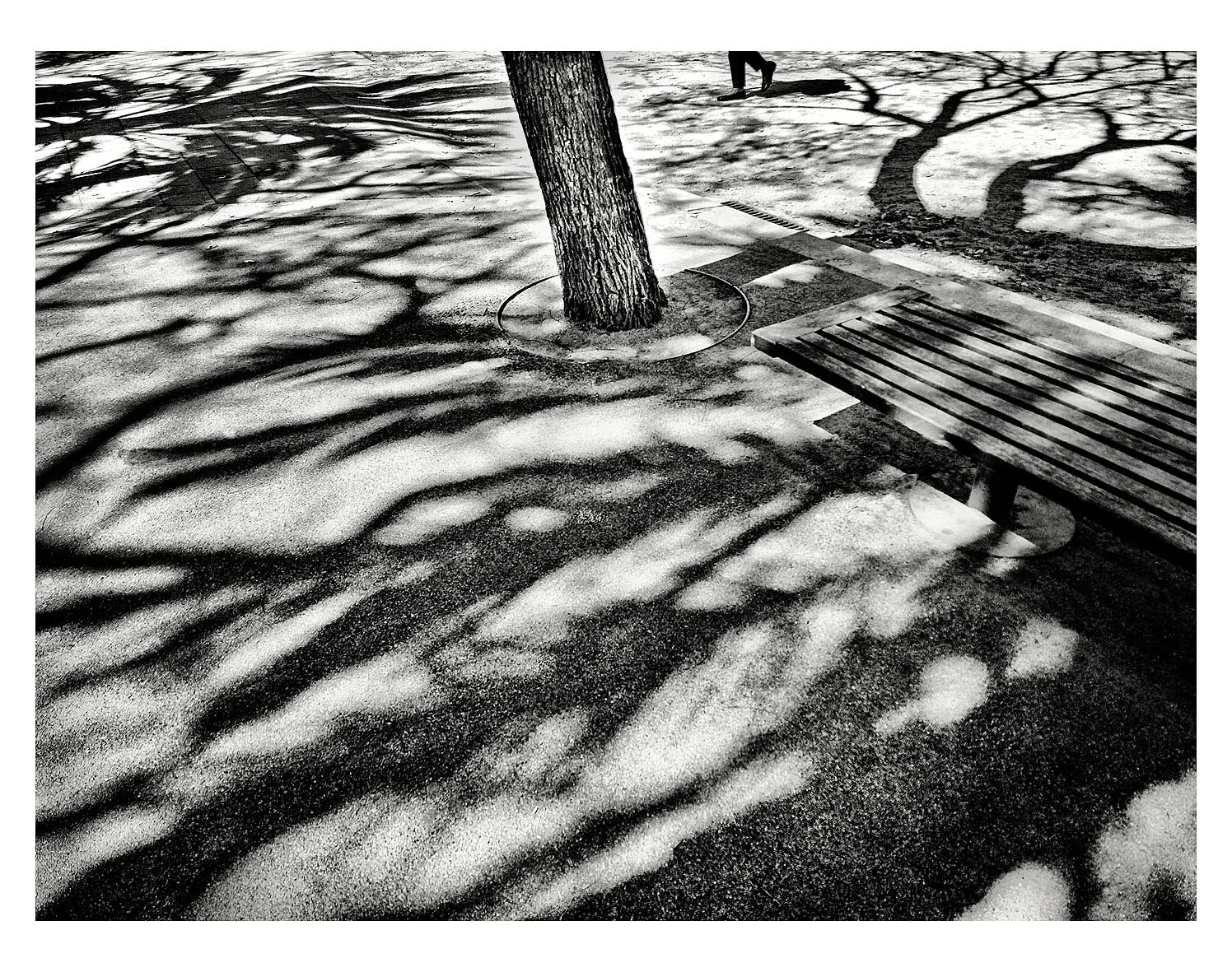 tree-shadows