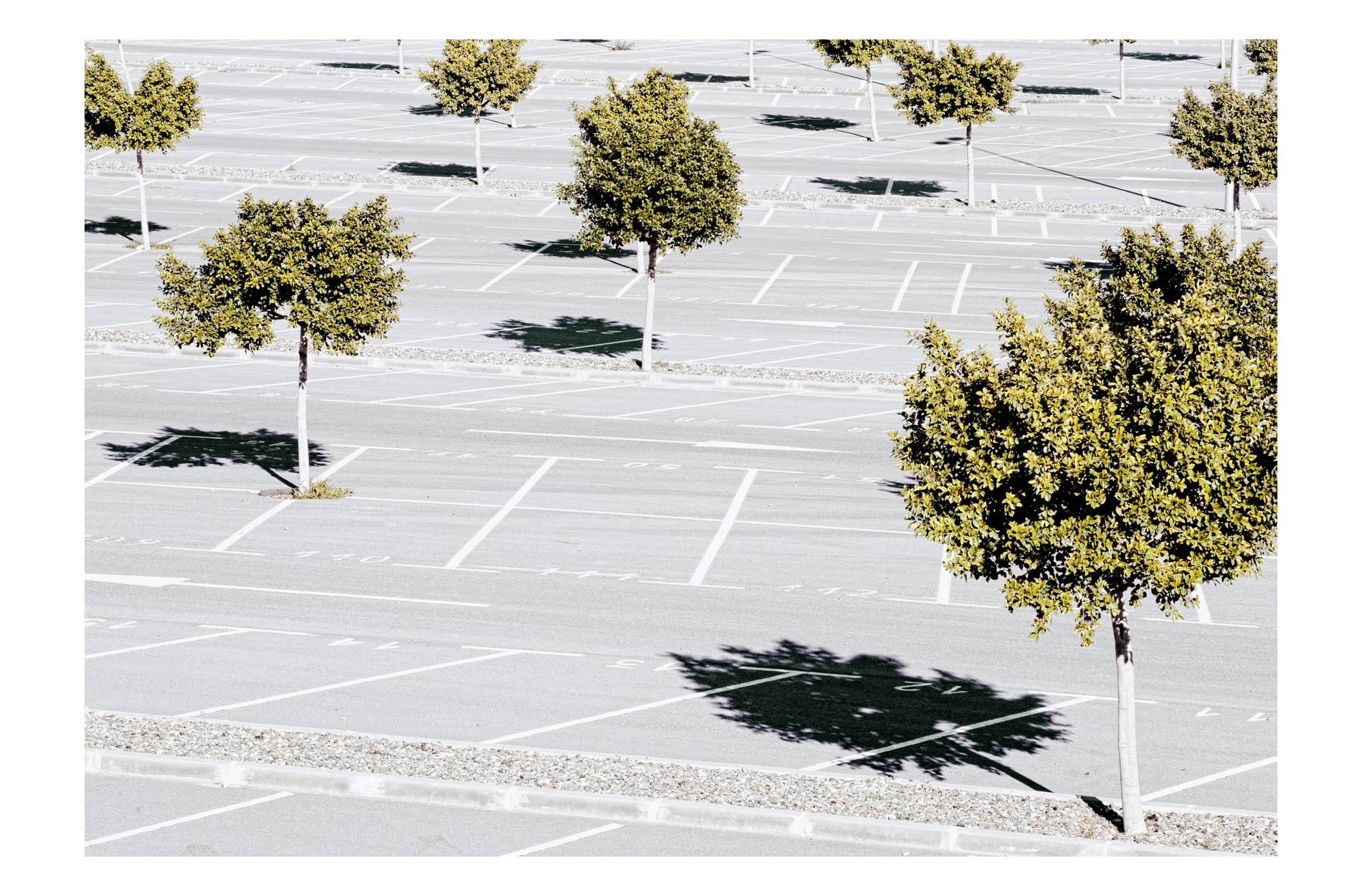 trees-carpark